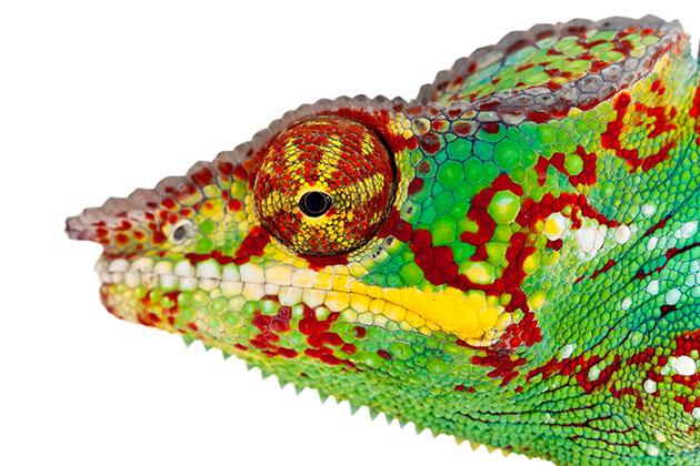 Lizard Using CRISPR
