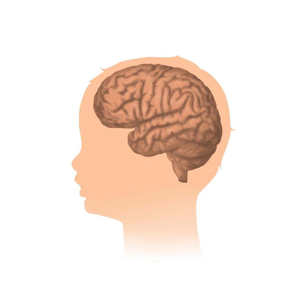 Development of Nervous